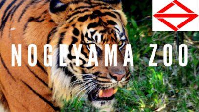 Nogeyama Zoo, Yokohama Travel Vlog in Japan 2018 🇯🇵