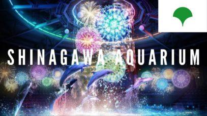 Seal Show | Shinagawa Aquarium, Tokyo Travel Vlog in Japan 2015 🇯🇵