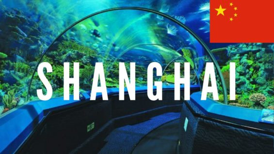 Shanghai Ocean Aquarium, China Travel Vlog 2016 🇨🇳
