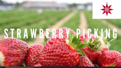 Strawberry Picking | Tsukuihama, Yokosuka Travel Vlog in Japan 2019 🇯🇵
