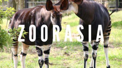 Zoorasia Zoo, Yokohama Travel Vlog in Japan 2016 🇯🇵