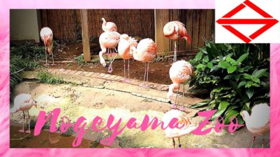 Nogeyama Zoo #YokohamaTravelVlog in Japan 2020 🇯🇵